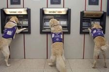 Банкоматы: забытое прошлое или перспективное будущее?