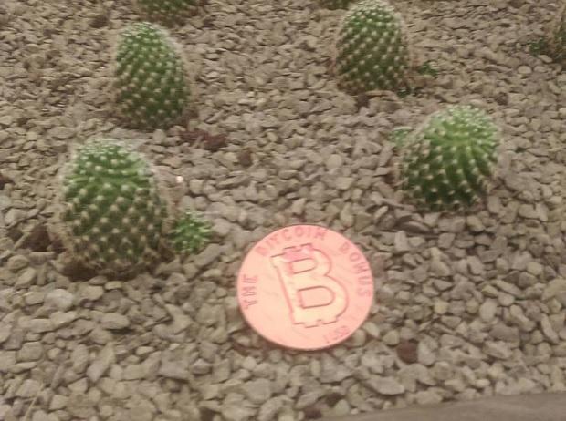 bitcoin_bonus