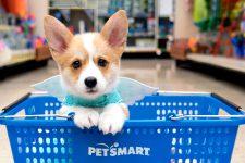 PetSmart и Chewy: что нужно знать о самой крупной сделке в e-commerce