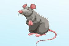 Крысы сгрызли более миллиона рупий, забравшись в банкомат